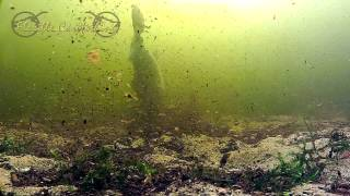 Complete drill big (grass) carp under en above water by Joop Butselaar
