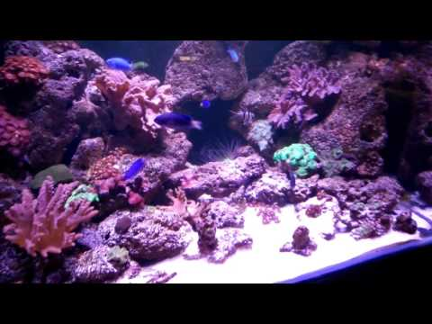 Marine Aquarium at Nature Aquatics Bangladesh