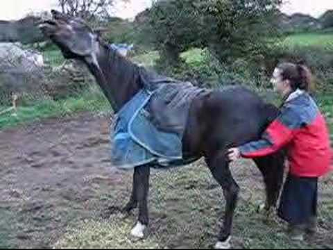 Gay, A Very Itchy Horse Music Videos