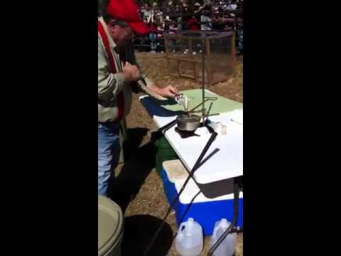 Rattlesnake Roundup Georgia Rattlesnake Roundup