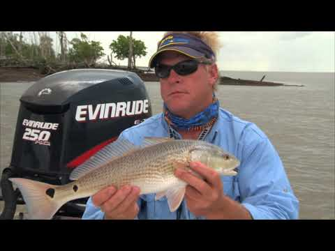 Cork Poppin' Daddy - REDFISH on Deadly Combo