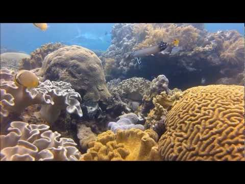 Snorkeling In The Banda Islands, Indonesia