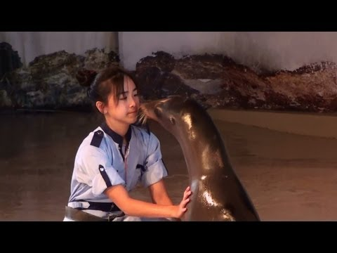 Whisker's Theatre (威威劇場) Complete Sea Lion show with Ocean Park mascot, Hong Kong 1080p HD