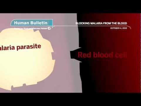 Science Bulletins: Blocking Malaria from the Blood