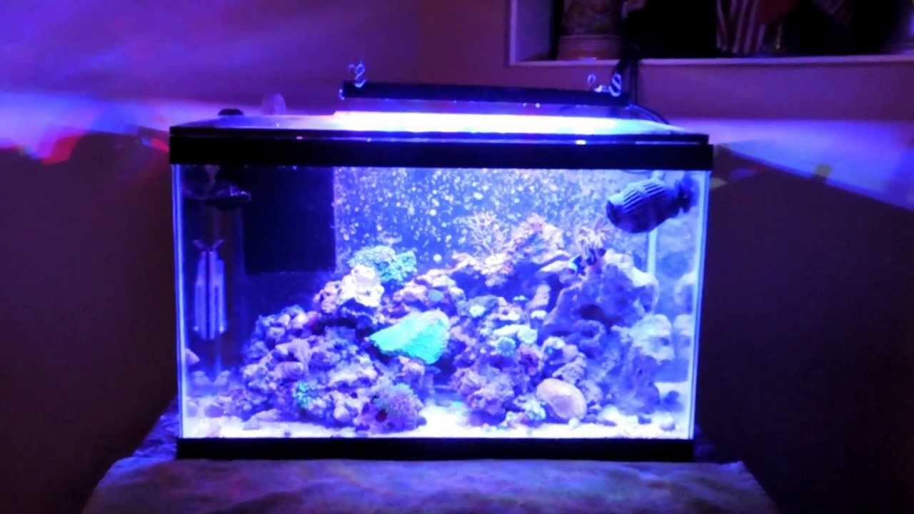 10 gallon nano reef diy sump led lights youtube. Black Bedroom Furniture Sets. Home Design Ideas