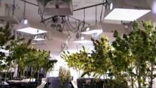 Marijuana Nation : National Geographic (1/5)