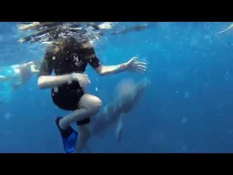 GoPro  Swimming with Whale Sharks