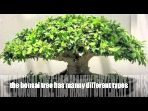 The History of the Bonsai Tree