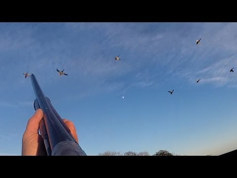 Last day of the season Herefordshire syndicate - Pheasant and Duck shooting GO Pro 3+ multi camera
