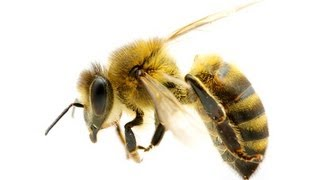 How to Treat Bee Stings at Home