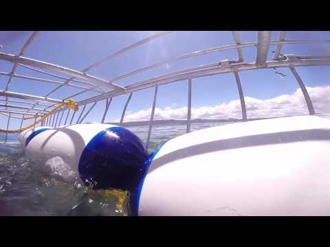 ケージダイビングでサメのアタック!