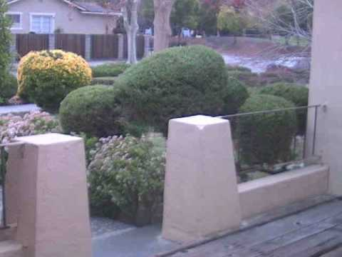 Northwood San Jose Mail Thief 2008-12-18 Video