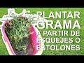 Plantar Césped a partir de esquejes o estolones | Como plantar grama MP3