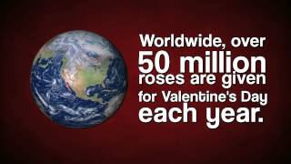 Interesting Facts about Valentine