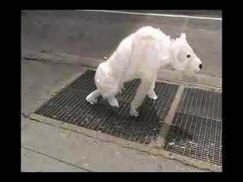 Air Bear (Seen On The Streets Of New York)