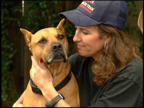 Dogs with jobs - Season 5, Episode 4: Dakota, Orca, Target