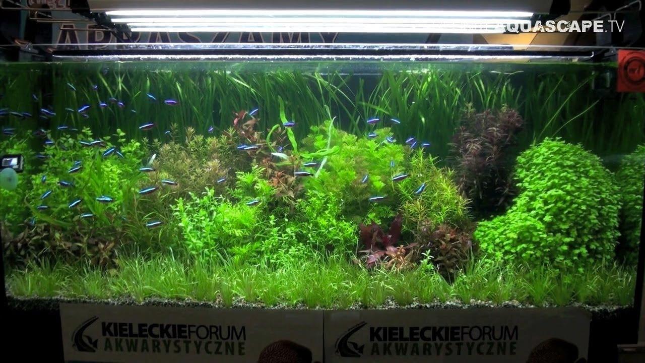 Aquascaping - Aquarium Ideas from ZooBotanica 2012, part 1 - YouTube