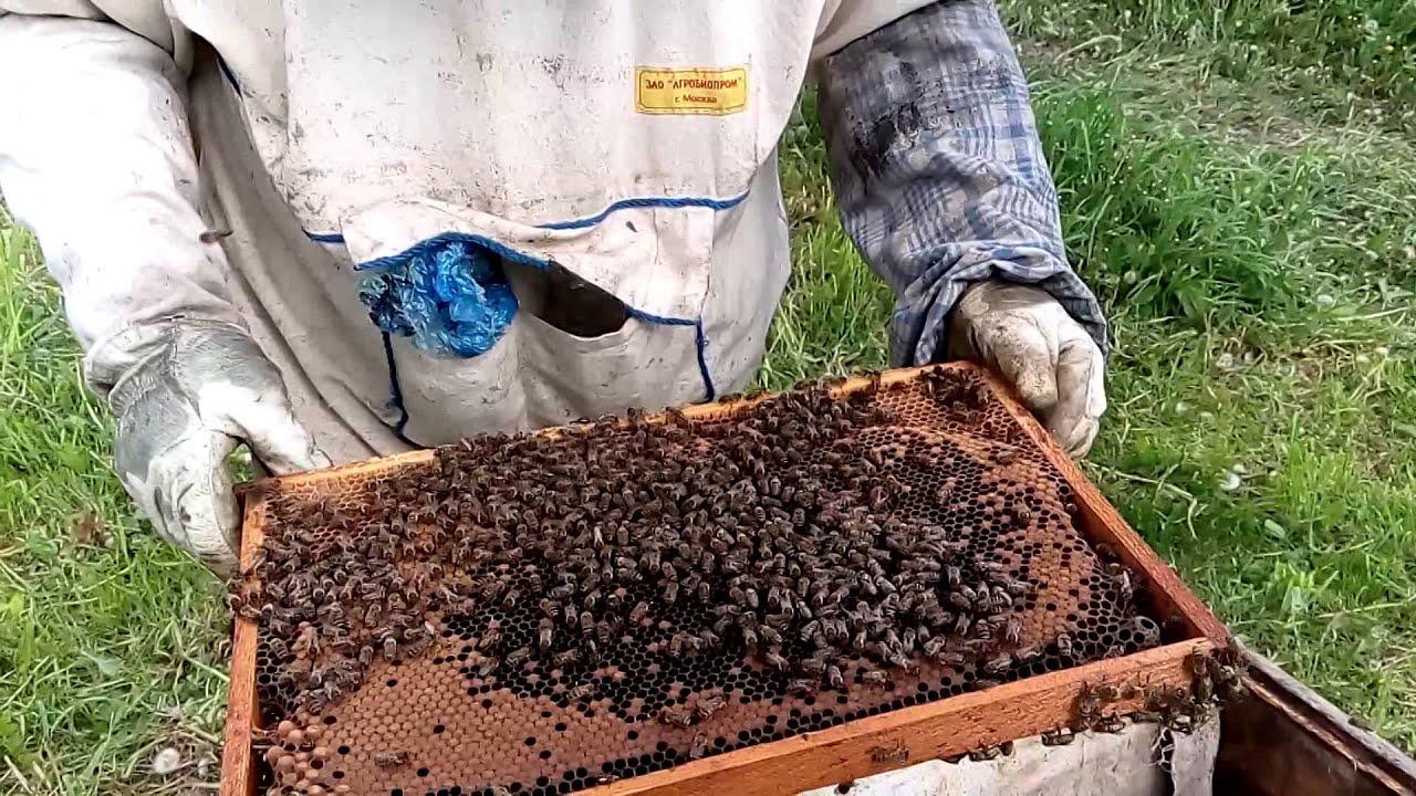 Как сделать отводок пчел Пасека. Пчелы. Мёд 73