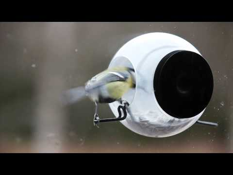 Bird Feeder from Born in Sweden