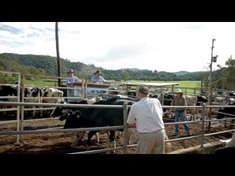 Cochrane Livestock - Auction (Web Content)