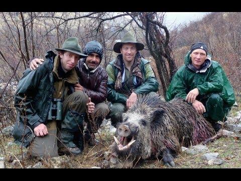 Tusker Wild Boar Hunting Tajikistan - Attila Sanglier Chasse 2013-14 By Seladang video