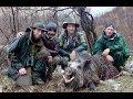TUSKER WILD BOAR HUNTING TAJIKISTAN - ATTILA SANGLIER CHASSE 2013-14 by SELADANG