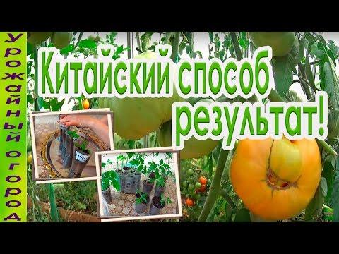 Как заработать на выращивание помидор 157