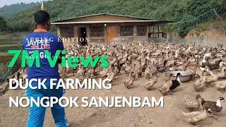 Duck Farming Nongpok Sanjembam