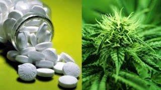 Medical Marijuana Cuts Painkiller Overdoses