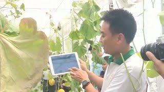 Tin Công Nghệ: Ứng dụng CNTT trong nông nghiệp cần giải pháp bền vững