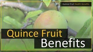 Quince Fruit Health Benefits