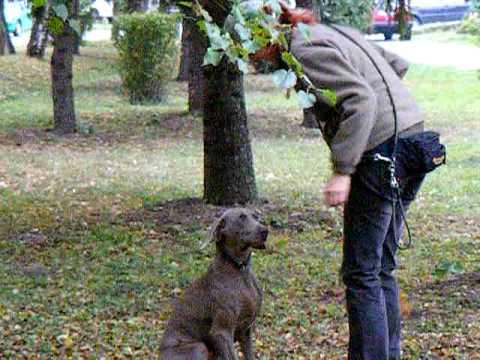 Pes - aport lišky
