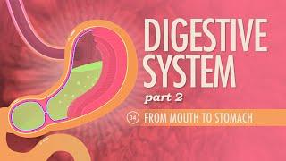 Digestive System, part 2: Crash Course A&P #34