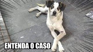 ENTENDA O QUE ACONTECEU COM O CACHORRO DO CARREFOUR