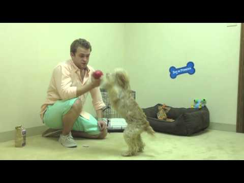 how do i get my dog to stop peeing while I am at work - Crate training by Trevor the pet Guy