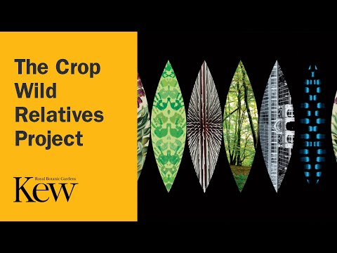 Beyond the Gardens: The Crop Wild Relatives Project