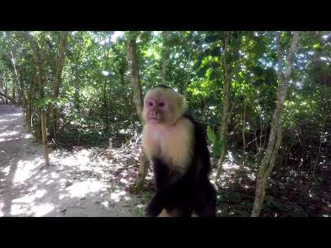 Reisen durch Zentralamerika: MANUEL ANTONIO NATIONALPARK, Costa Rica