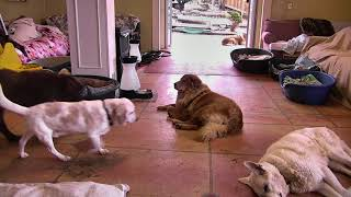 Senior Dog Gathering Room Cam 02-25-2018 12:41:43 - 13:41:44