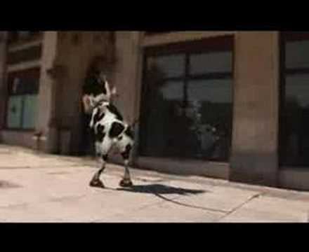dancing cow