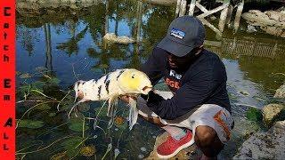 SAVING KOI FISH from Pond Eater!