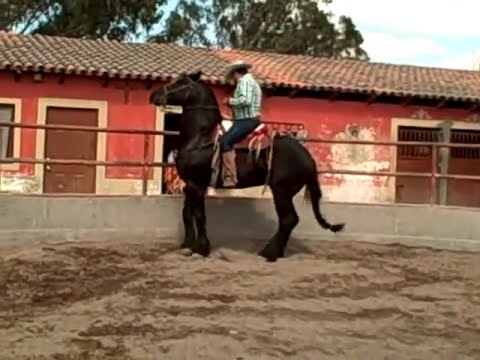 Horse Training - Lagos de Moreno, Jalisco, Mexico