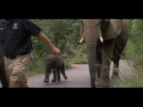 One Lucky Elephant - Film Trailer