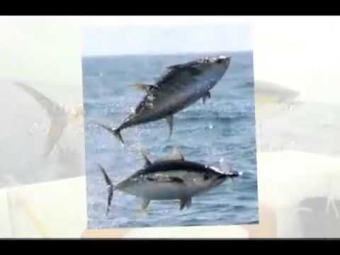 Costa Rica Sport Fishing Vacation Packages|Call (888) 995-1507