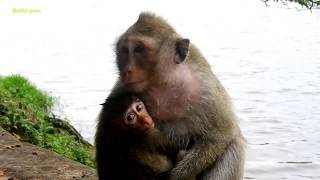 OMG!!! Old Leader Monkey Bites Small Baby To Nearly Lost Of Life​ And Still Try Bite Again