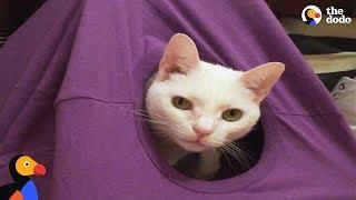 DIY Cat Tent: How To Make The Perfect Cat Hideaway | The Dodo Pet Parent Hacks