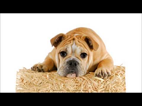Stop Neighbors Dog Barking - How To Stop Dog Barking