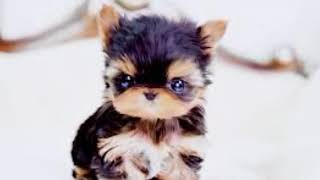 Top 20 Cute Puppies