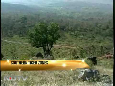 The southern tiger zones