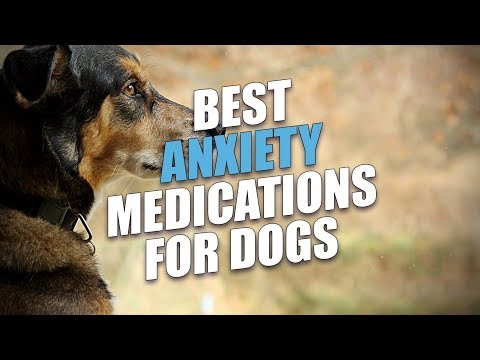 Download Lagu Best Anxiety Medications for Dogs.mp3