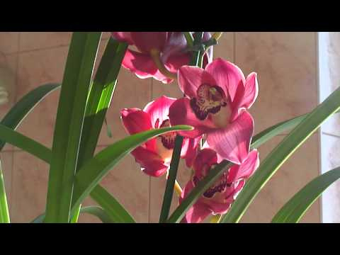 Завоз орхидеи и сново новые приобретения ))